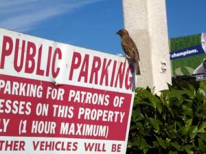 bird parking